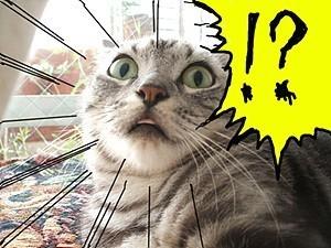 고양이 놀라는 표정 레전드