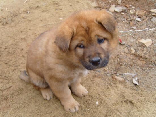 시무룩 좌절 힘빠짐 힘빠지는 시무룩한 슬픈 강아지 표정