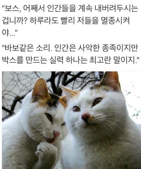 고양이 인간 사악한 멸종 바보같은 종족 박스 실력 최고