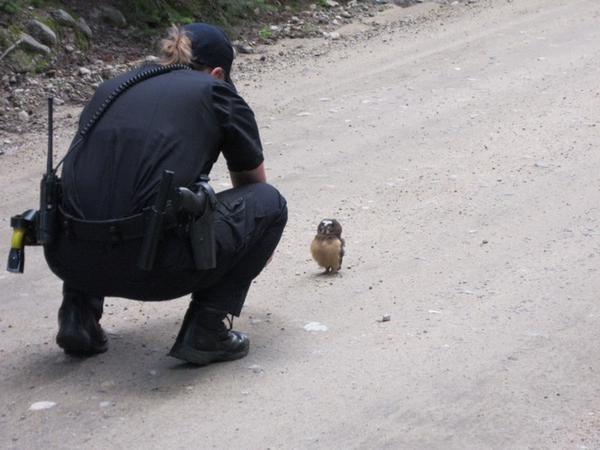 경찰 올빼미 귀여운 아기 부엉이 단속 작은 오~ 검문